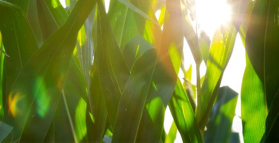 Agriculture Loans, Input Financing, Crop Insurance | Rabo